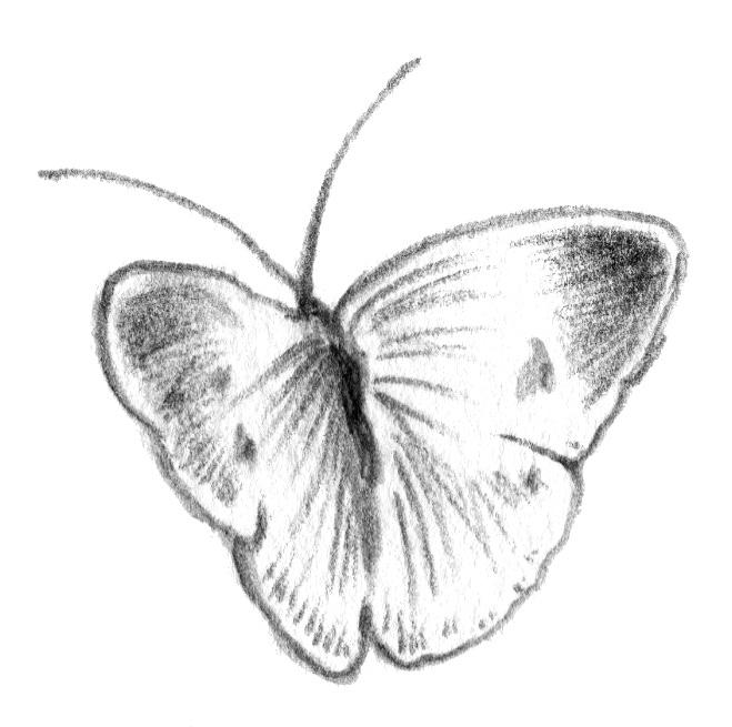 cyoucyo02